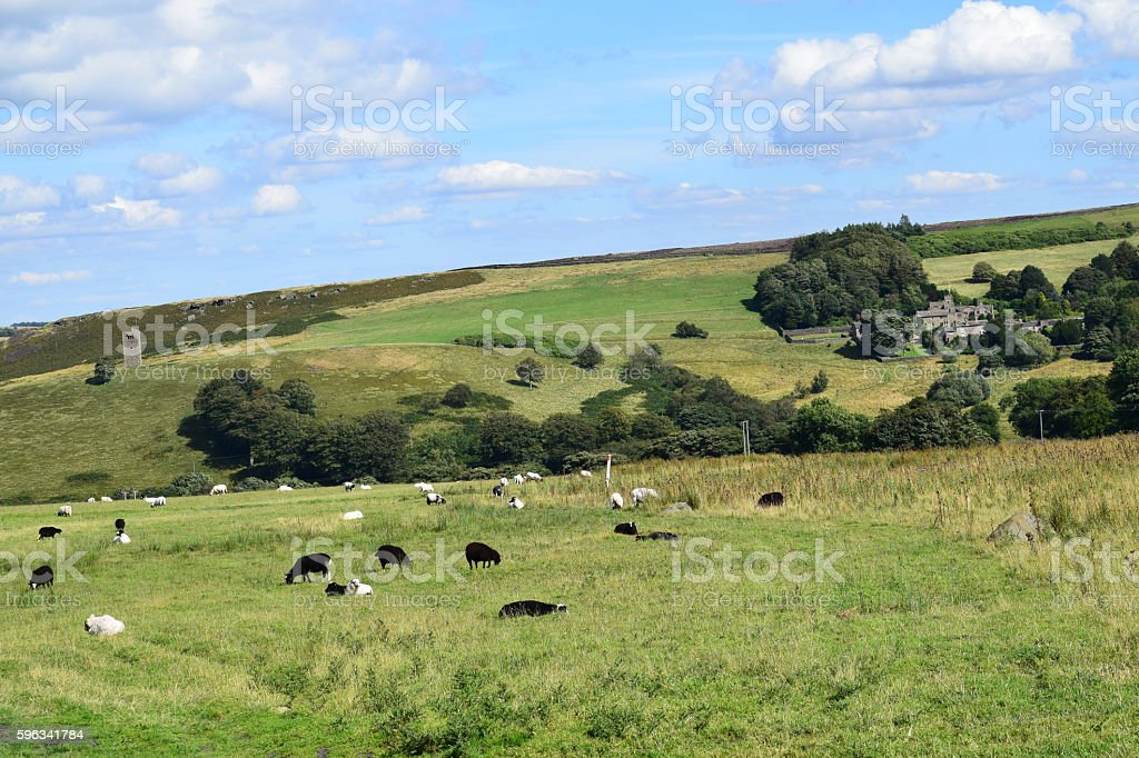 Sheep on a hillside royalty-free stock photo