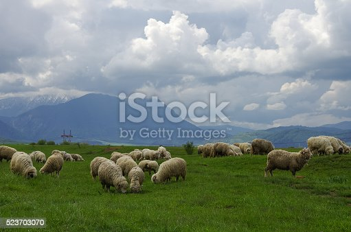 Sheep on the meadow with Fagaras Mountains on background, Southern Carpathians, Transylvania, Romania