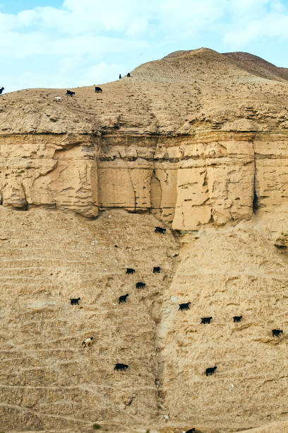 Sheep on the slopes of stony mountains stock photo