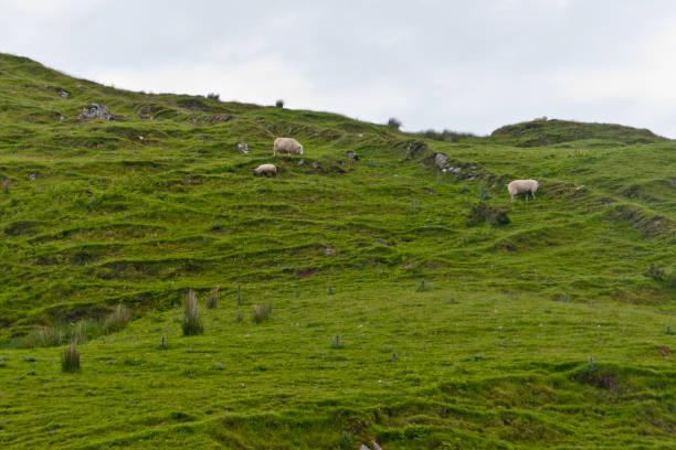Sheep Pasture Loughan Townland stock photo