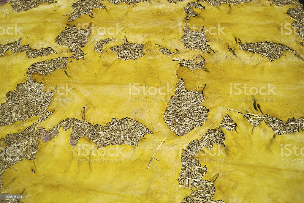 Sheep skin died yellow lying on straw exposed to the sun at a Tannery...