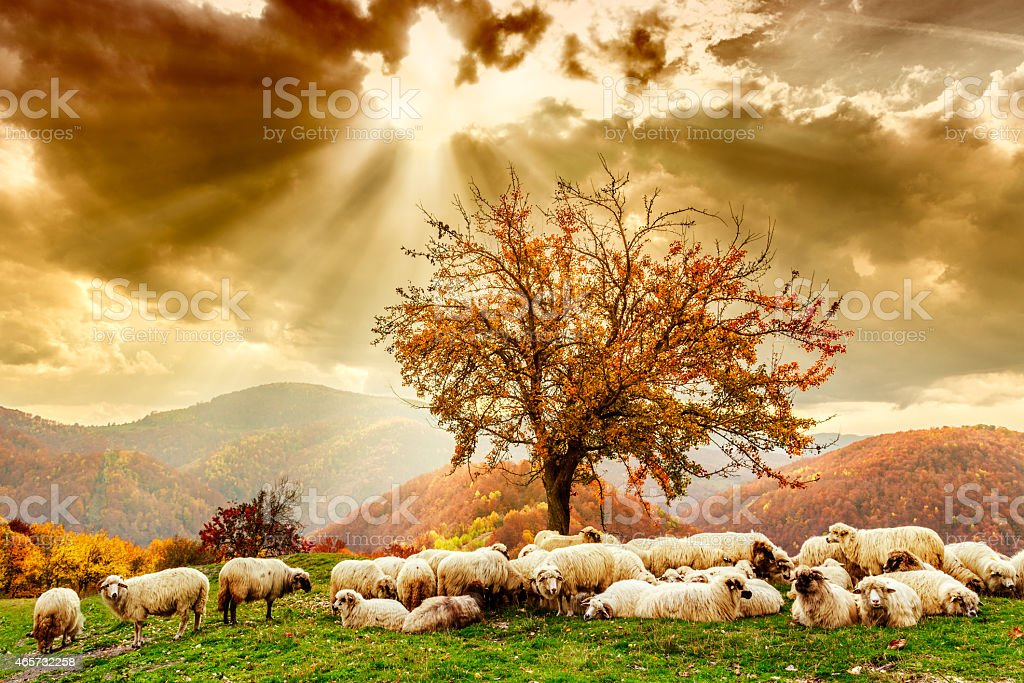 Sheep under the tree and dramatic sky stock photo