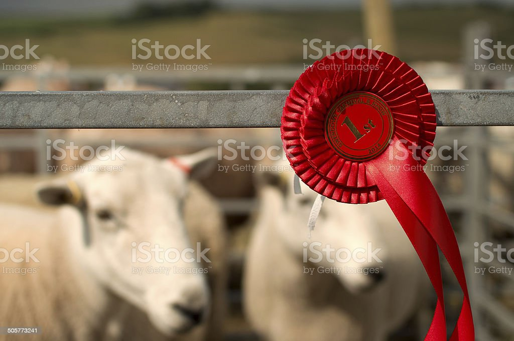 Sheep Winning 1st Prize at Village Fair stock photo