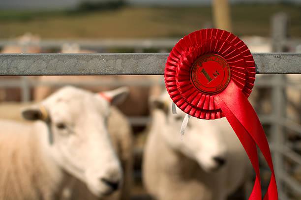 Moutons primé premier prix au Village de la foire - Photo