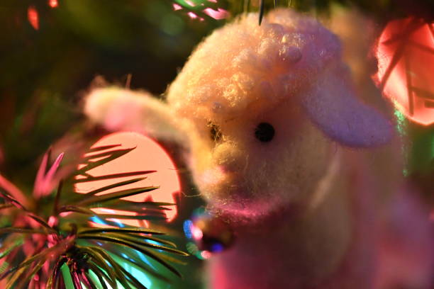 sheep with bell ornament close up - steven harrie stock pictures, royalty-free photos & images