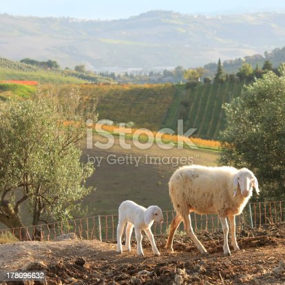 Mother sheep with its lamb