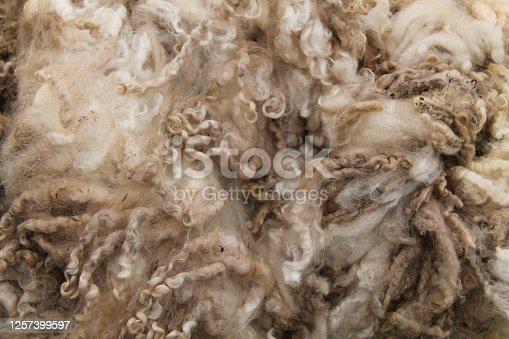 istock Sheep Wool Fleece. 1257399597