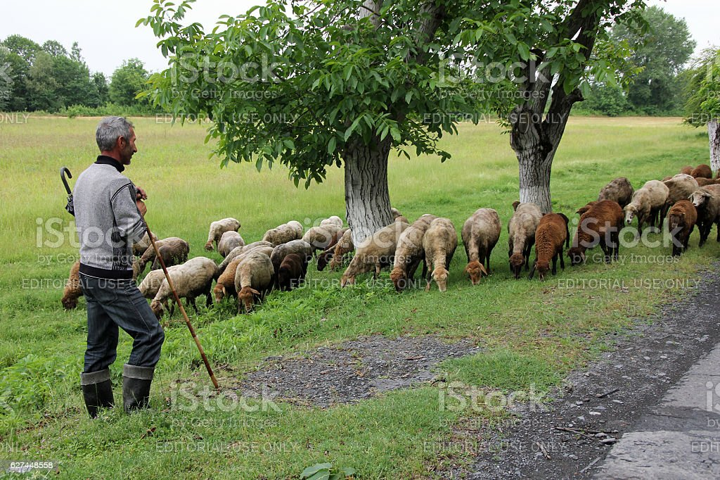 Sheepherder with his herd in Azerbaijan stock photo