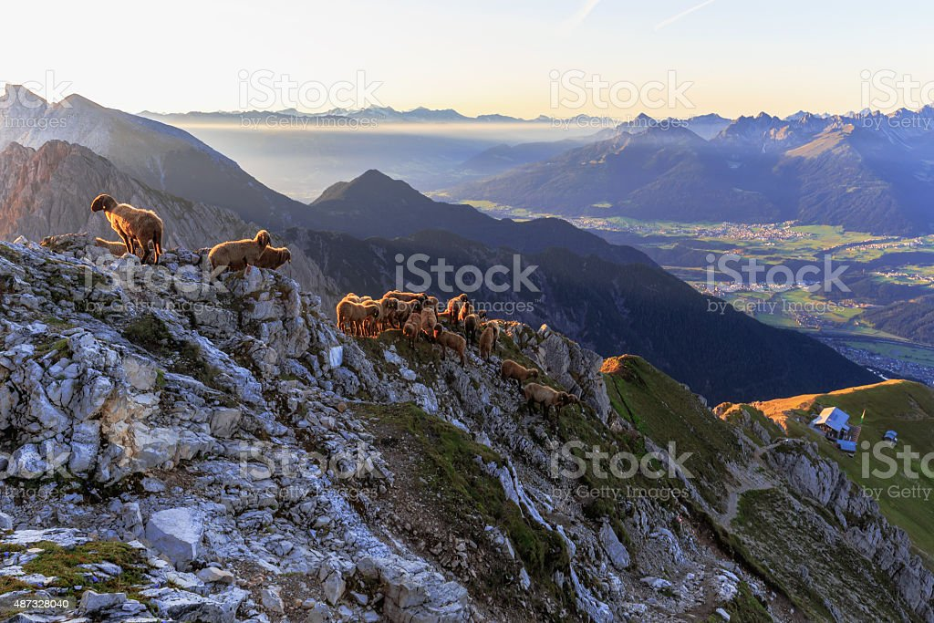 Sheeps at Dawn in the Mountains stock photo