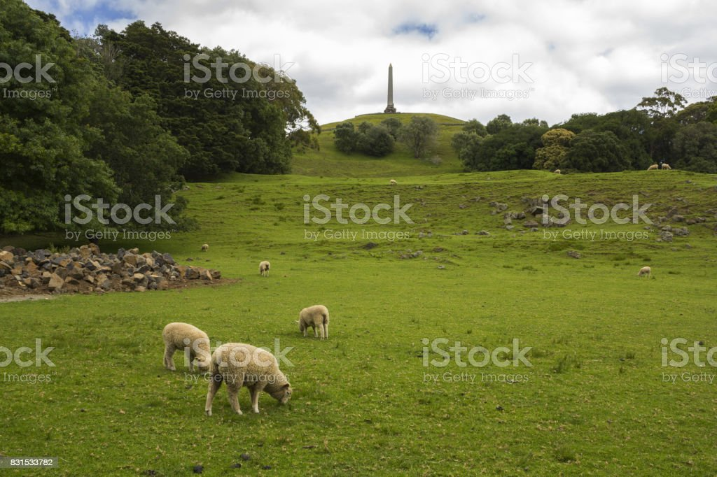 Sheeps at One Tree Hill Farm Auckland New Zealand stock photo