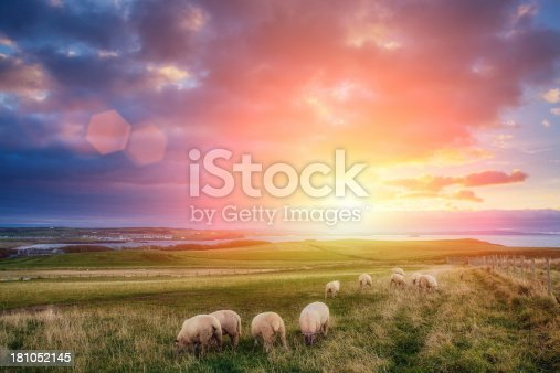 istock sheeps in Ireland at sunset 181052145