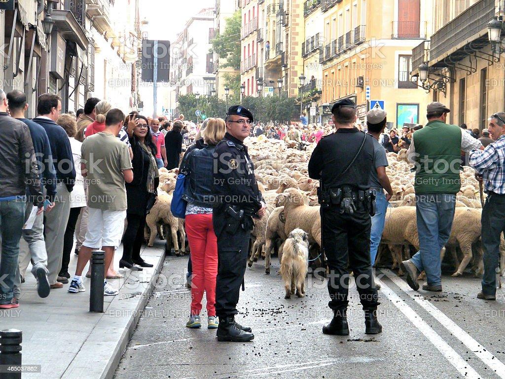 Sheeps in Madrid – Foto
