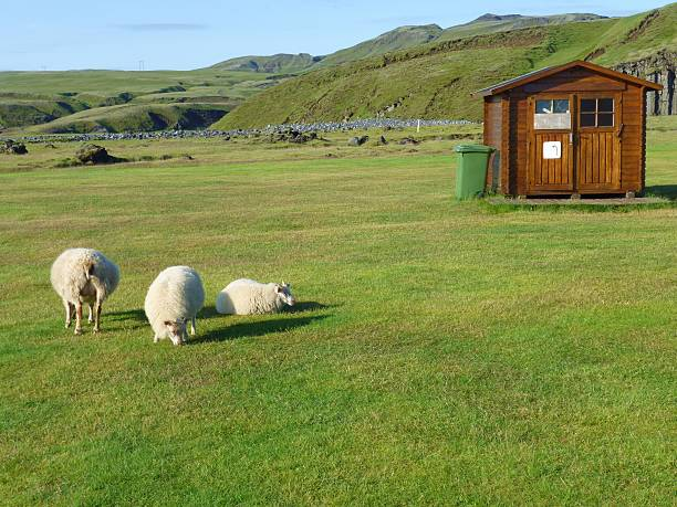 sheeps in das feld neben der kabine - mülltonnenhäuschen stock-fotos und bilder