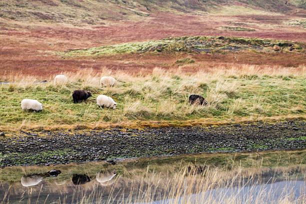 Sheeps on pasture stock photo