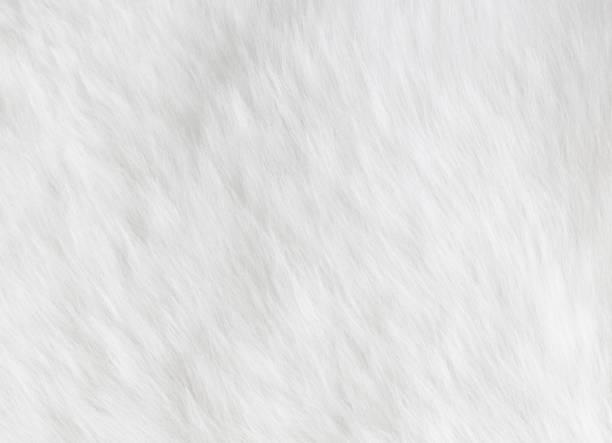 羊皮背景 - 動物毛髮 個照片及圖片檔