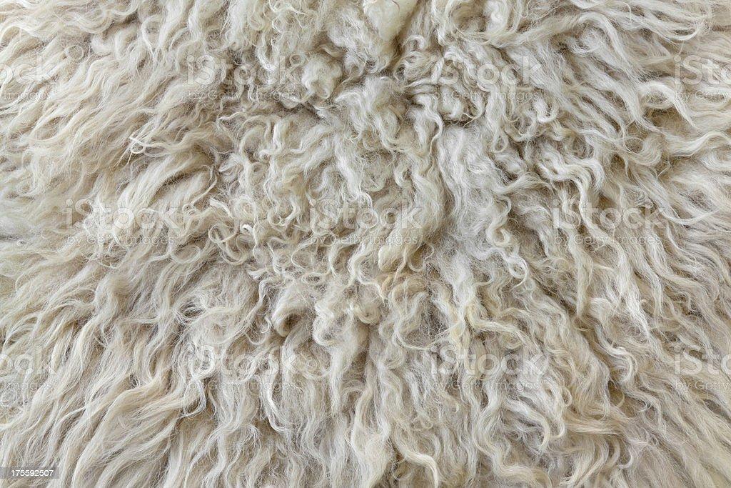 Piel de oveja - foto de stock