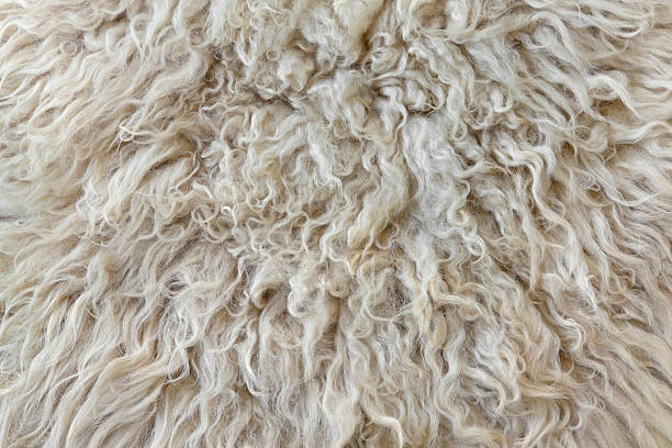 sheepskin - wool stock photos and pictures