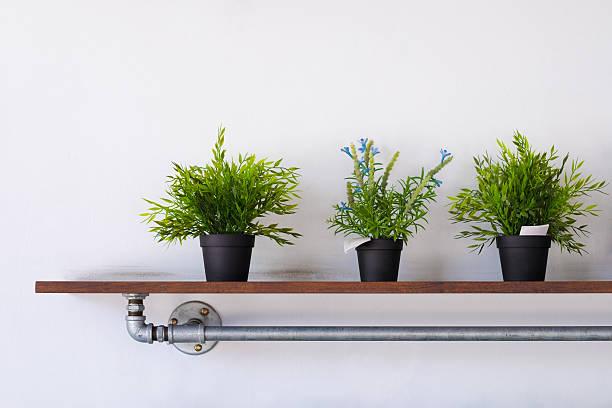 Shelf plant stock photo