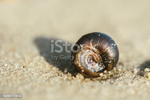 974677018istockphoto Shell and enening sunny sandy beach 1029777314