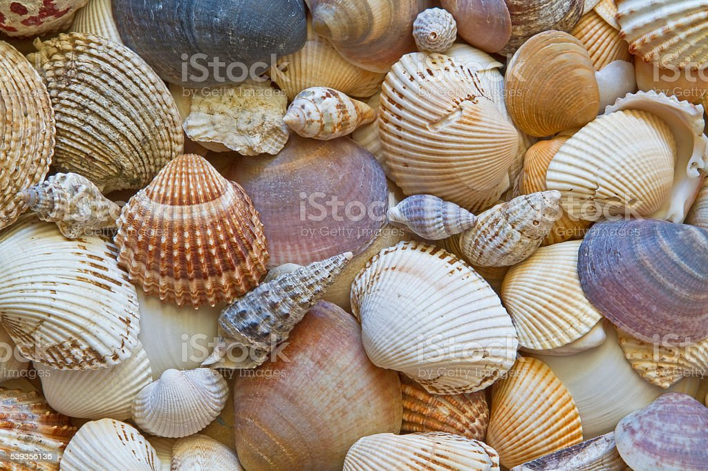 Shell background stock photo