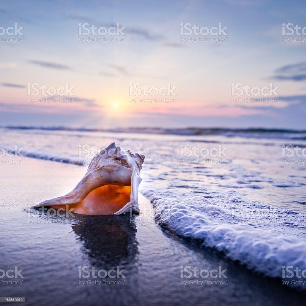 Shell, beach and morning sunrise stok fotoğrafı