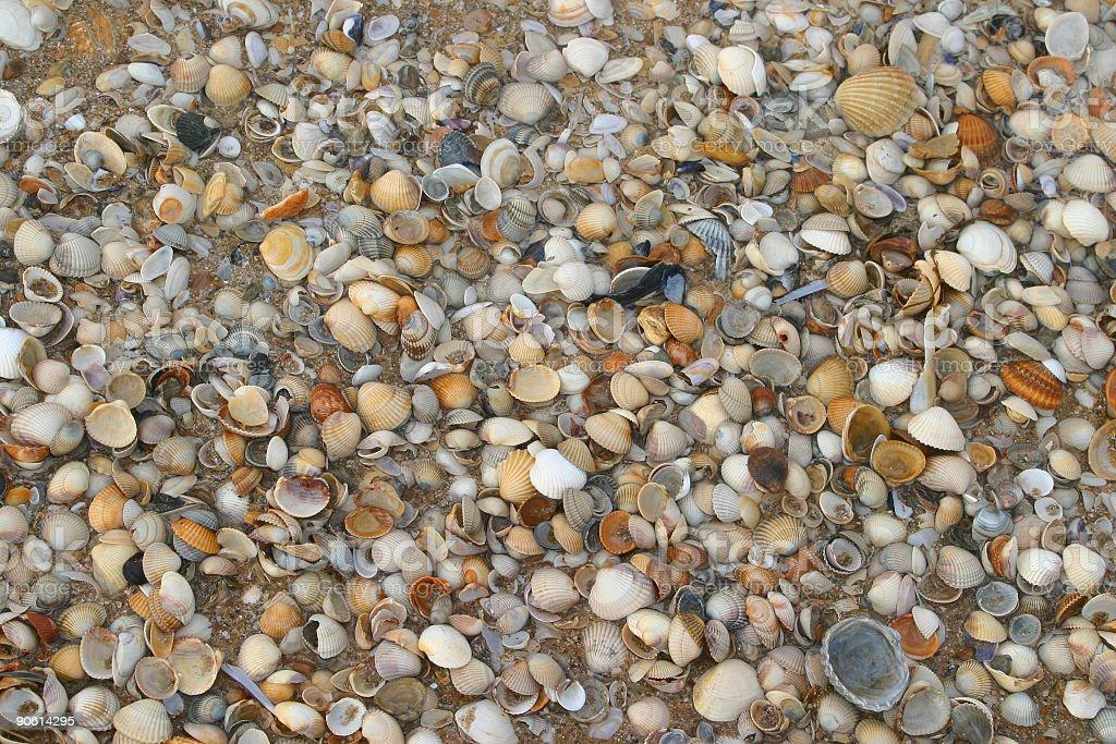 shell beach – Foto
