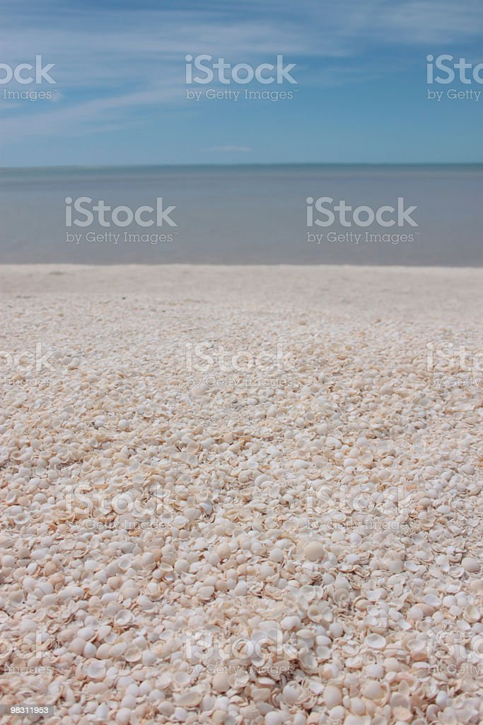 Shell beach, Western Australia royalty-free stock photo