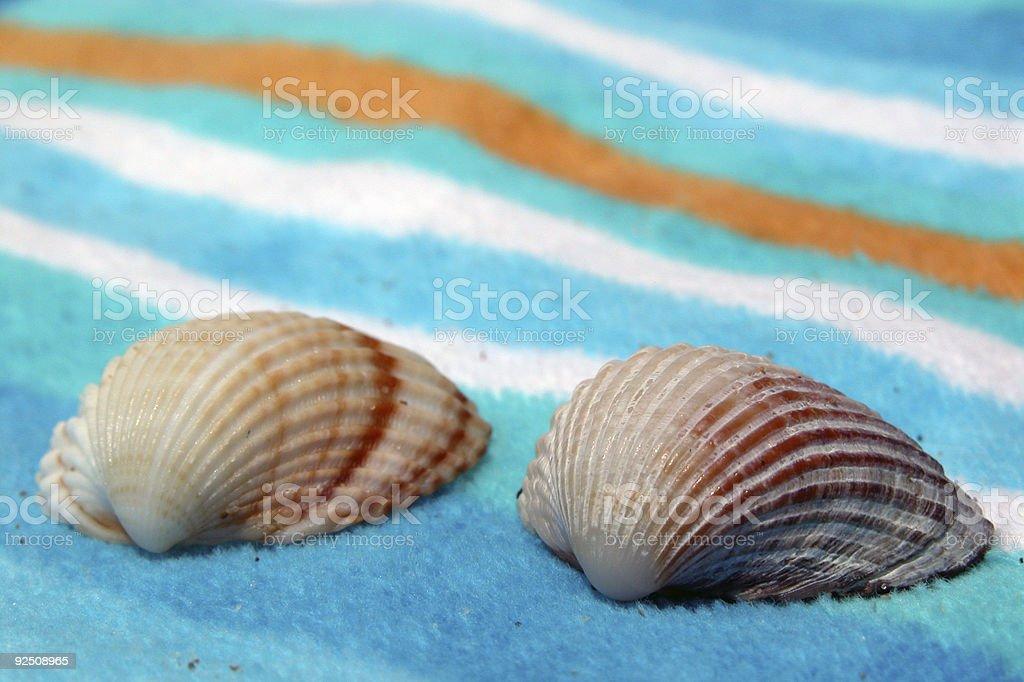 Shell Closeup royalty-free stock photo