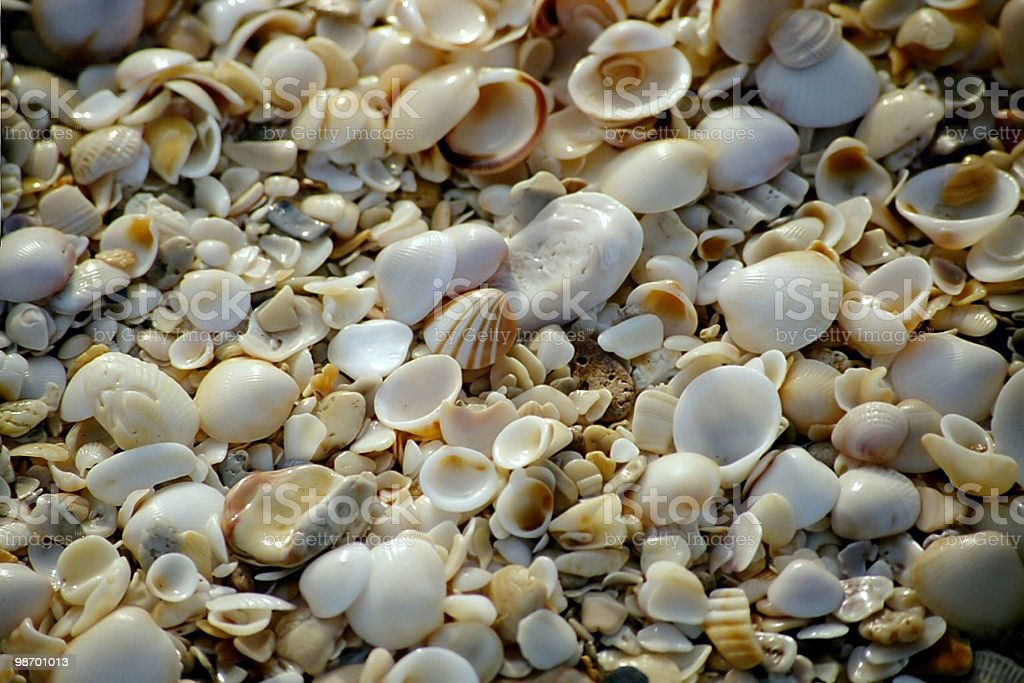 Shell collage royalty-free stock photo