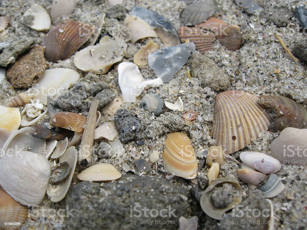 Shell Fragments On The Beach royalty-free stock photo