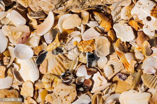 Tiny pieces of broken sea shells worn smooth by years of tide and wave action on a beach in St. Augustine, Florida