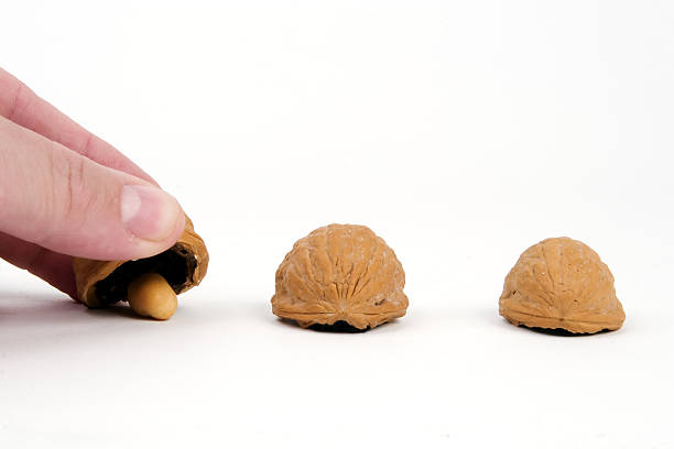 Shell Game Classic shell game, with three walnuts and a peanut shell game stock pictures, royalty-free photos & images