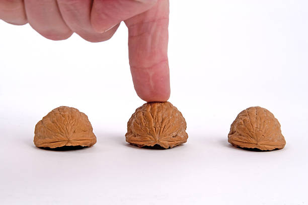 Shell Game Playing the classic shell game, with three walnuts. shell game stock pictures, royalty-free photos & images