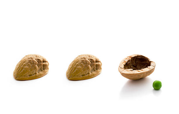 Shell Game Three walnut shells and a pea on a white background shell game stock pictures, royalty-free photos & images