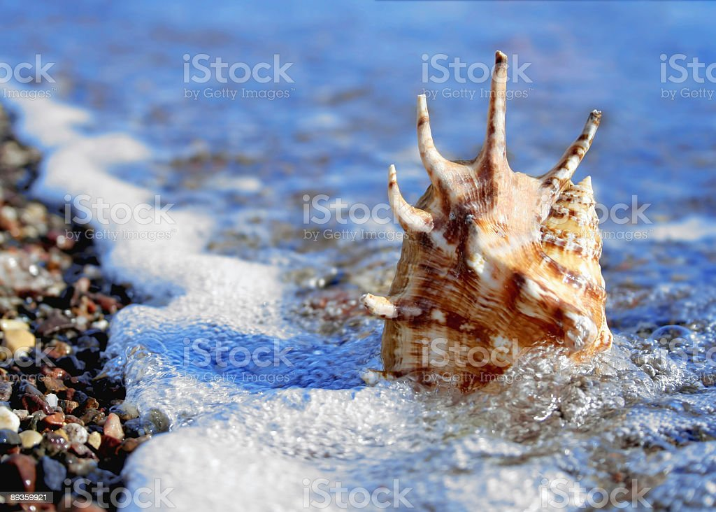 shell in the beach royalty free stockfoto