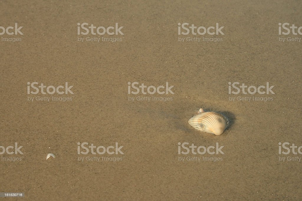 Shell in the Sand royalty-free stock photo