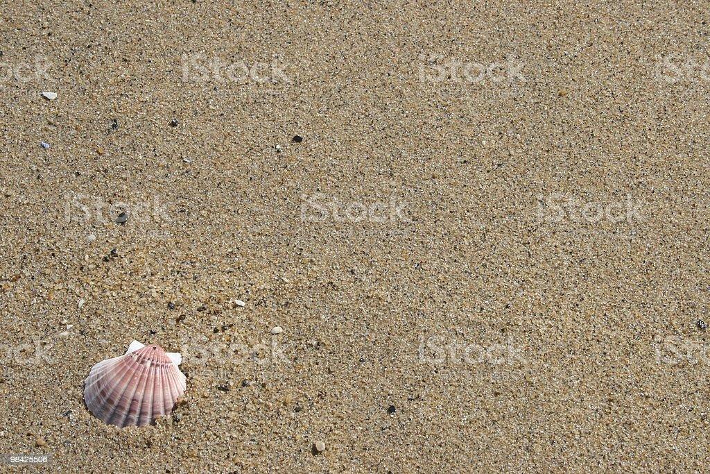 Conchiglia sulla sabbia foto stock royalty-free