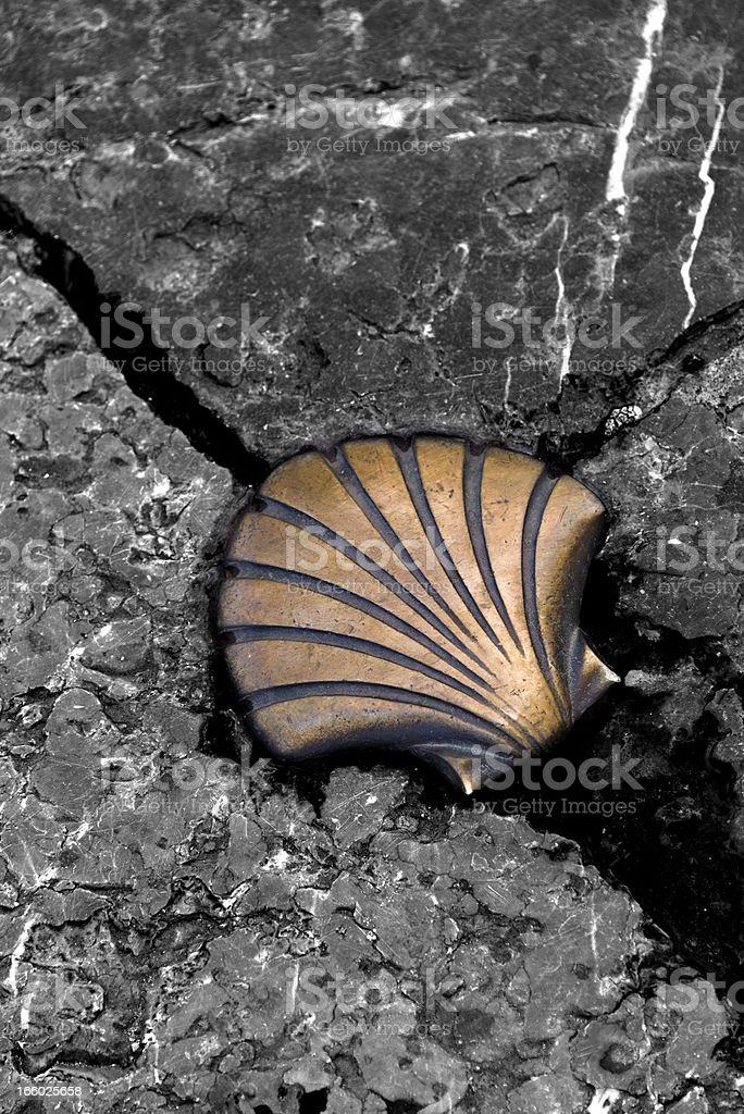 Shell in the Way of St James royalty-free stock photo