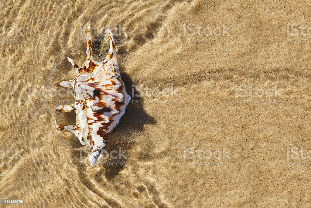 Shell in water royalty-free stock photo