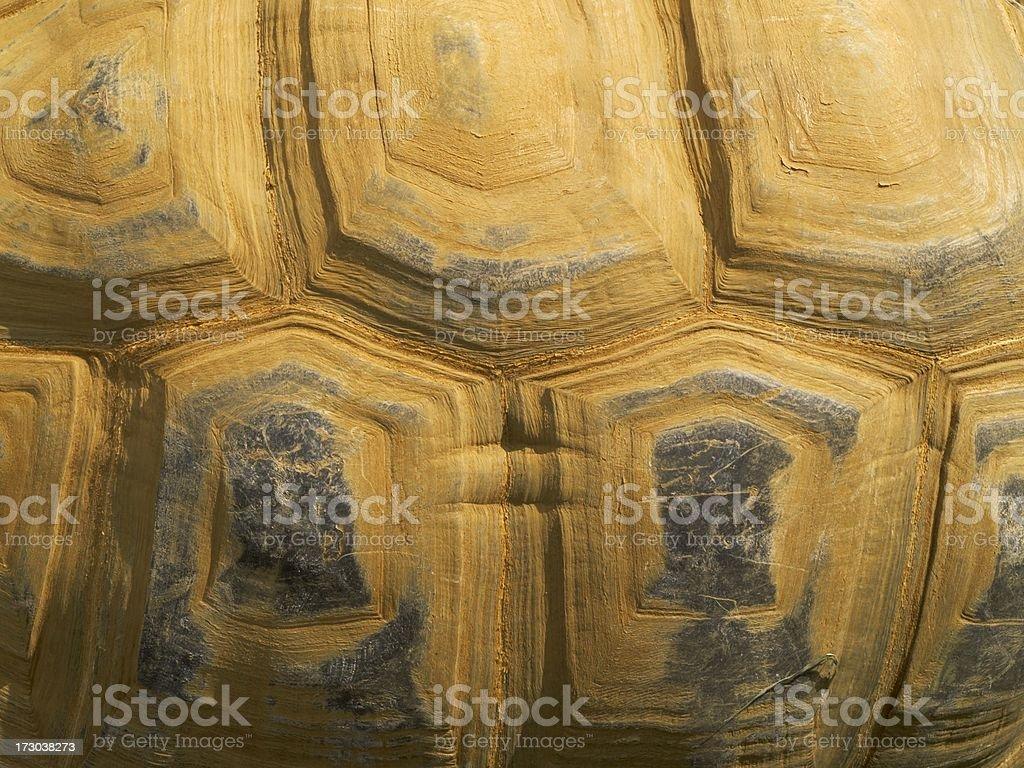 Shell of Aldabran tortoise royalty-free stock photo
