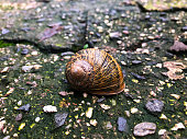 Shell of the snail.