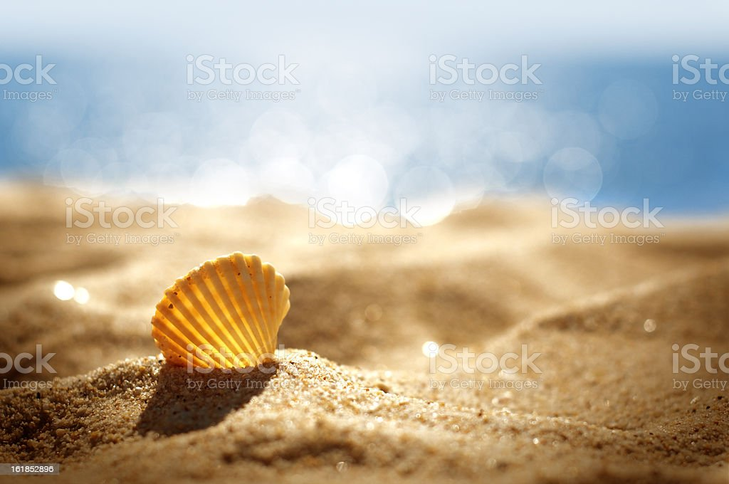 shell on a beach royalty-free stock photo