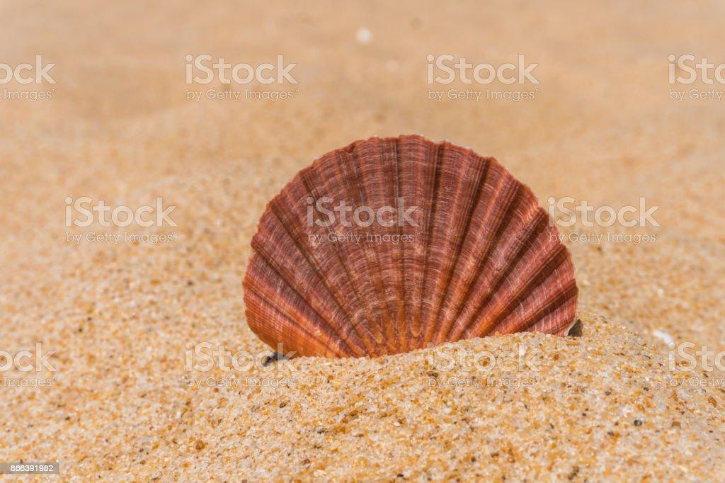 Shell on a sandy beach stock photo