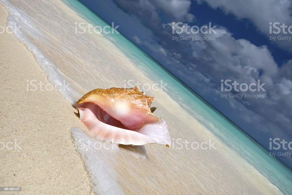 Shell on a white sand beach near blue see royalty-free stock photo