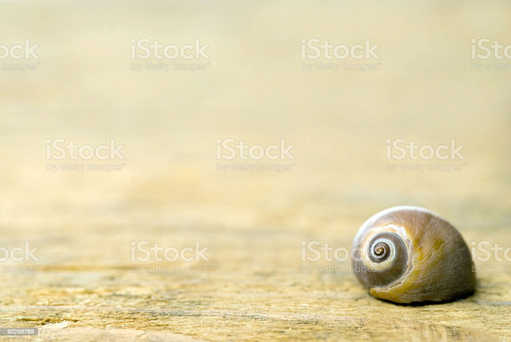 Shell on driftwood royalty-free stock photo