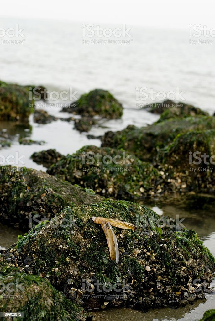 shell on reef stock photo