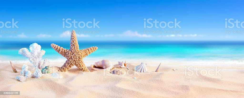 Shell on Sand In Tropical Seashore ストックフォト