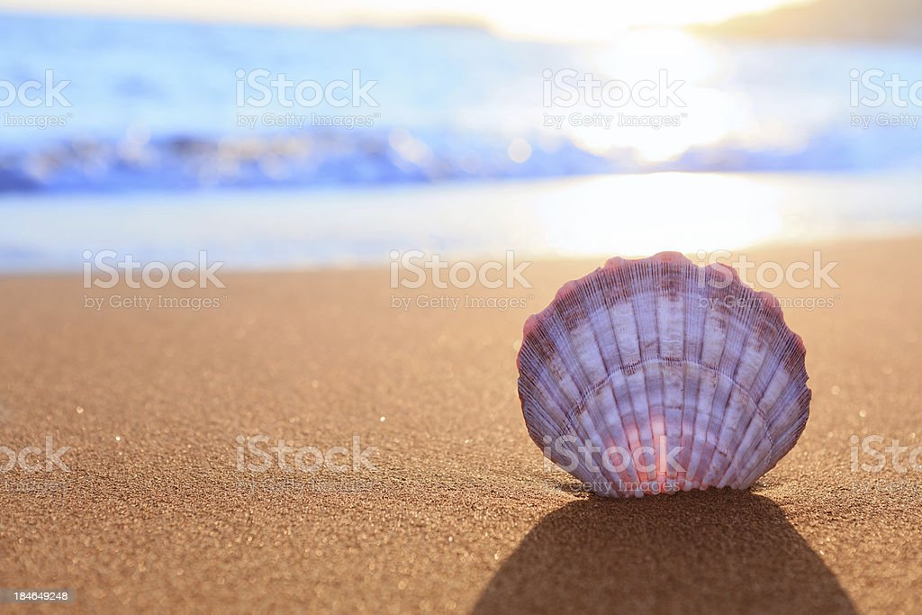 Shell On The Beach stok fotoğrafı