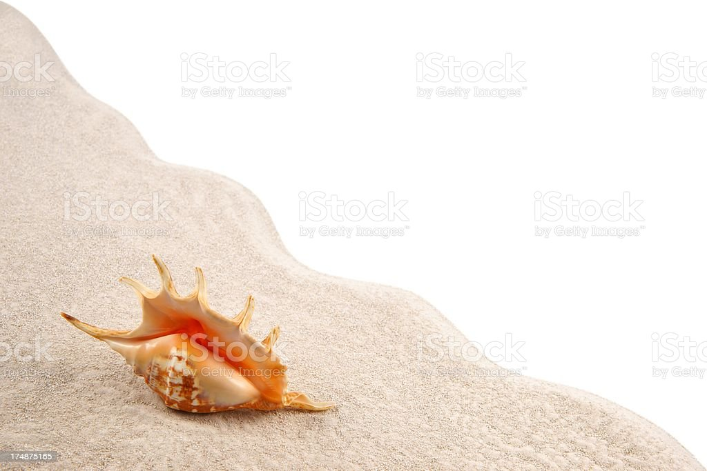 Shell on the sand as background royalty-free stock photo