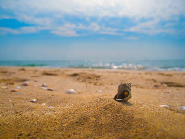 shell on the sand - ferragosto foto e immagini stock